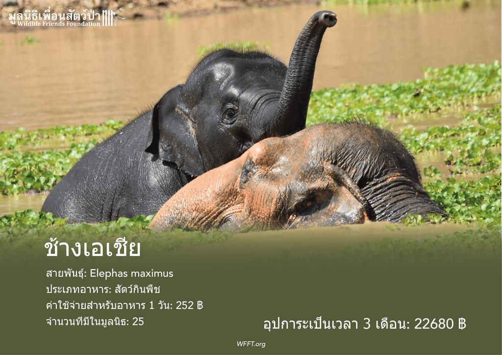 ช้างเอเชีย