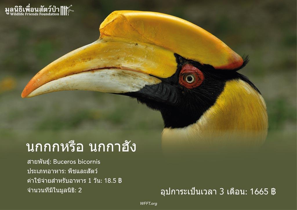 นกกกหรือ นกกาฮัง