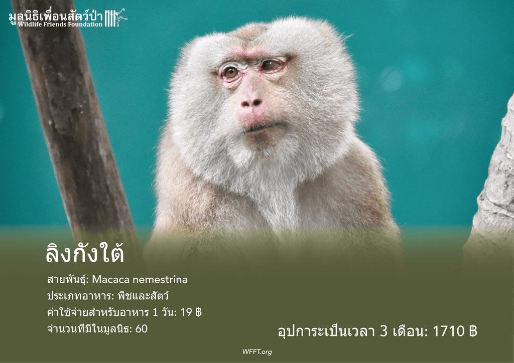 ลิงกังใต้