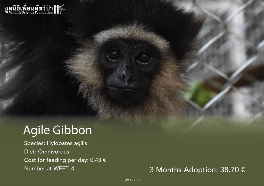 Agile Gibbons