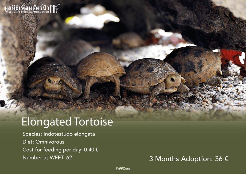 Elongated Tortoises