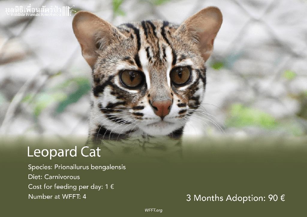 Leopard Cats